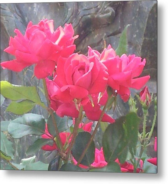 Austin Roses Metal Print