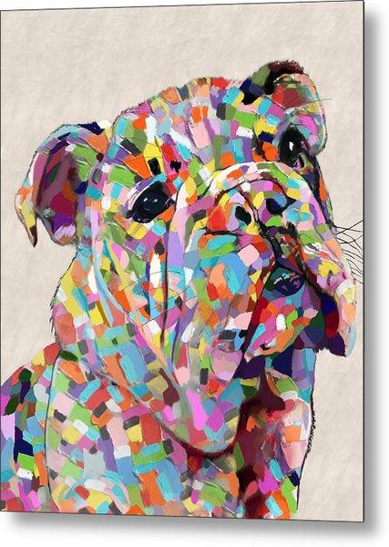 Australian Bulldog  Metal Print