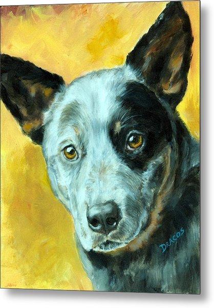 Australian Cattle Dog Blue Heeler On Gold Metal Print