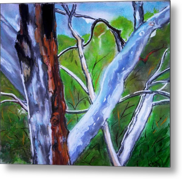 Australian Gum Trees Metal Print