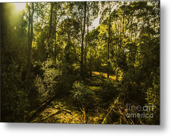 Australian Rainforest Landscape Metal Print