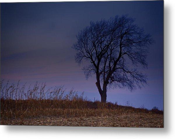 Autum Tree Metal Print