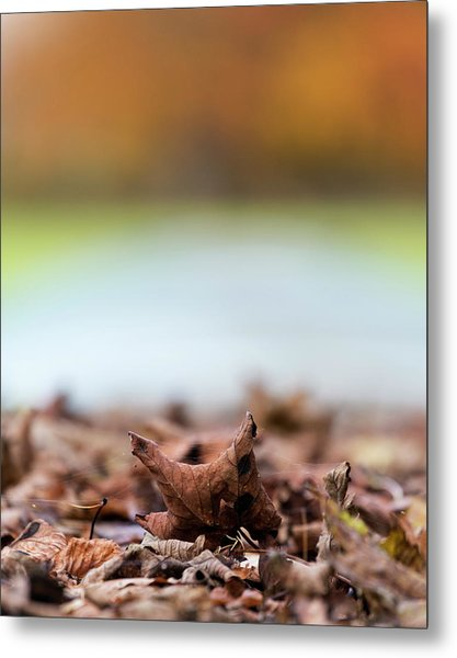 Autumn Abstract Metal Print