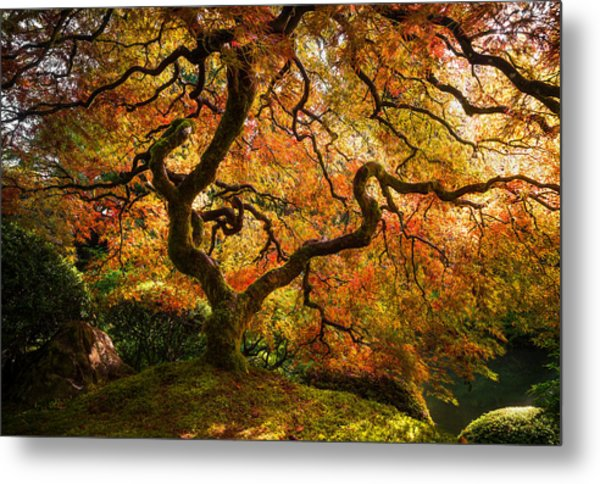 Autumn Arrival Metal Print