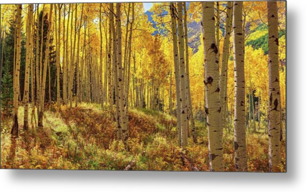Autumn Aspen Forest Aspen Colorado Panorama Metal Print