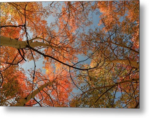 Autumn Aspens In The Sky Metal Print