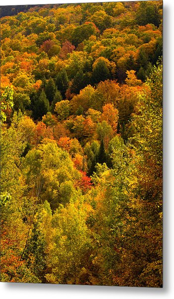 Autumn At Acadia Metal Print