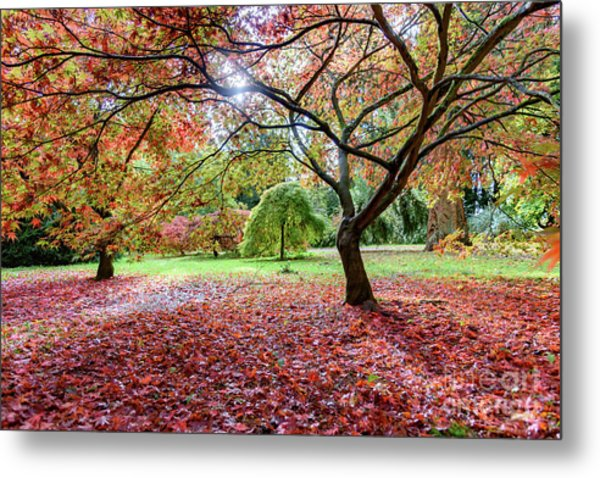 Autumn At Westonbirt Arboretum Metal Print