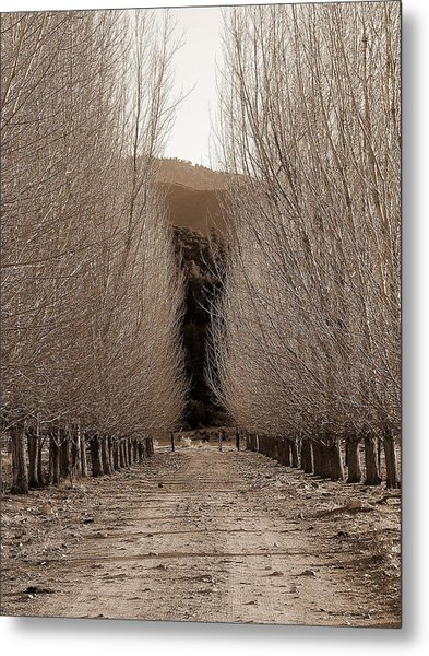 Autumn Bares Her Trees Metal Print