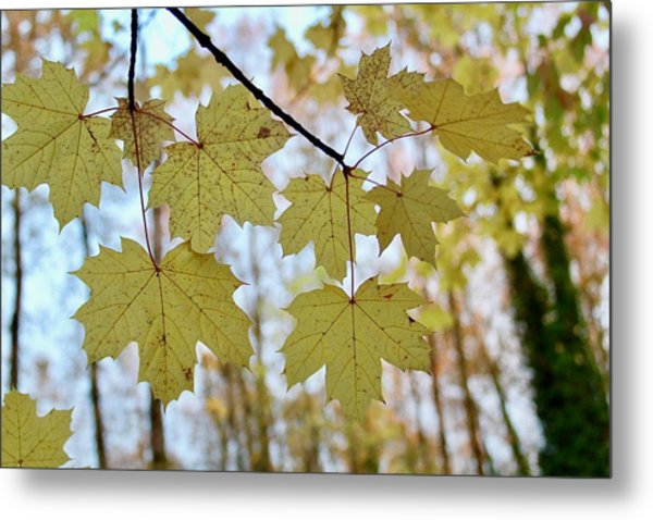 Autumn Beauty Metal Print