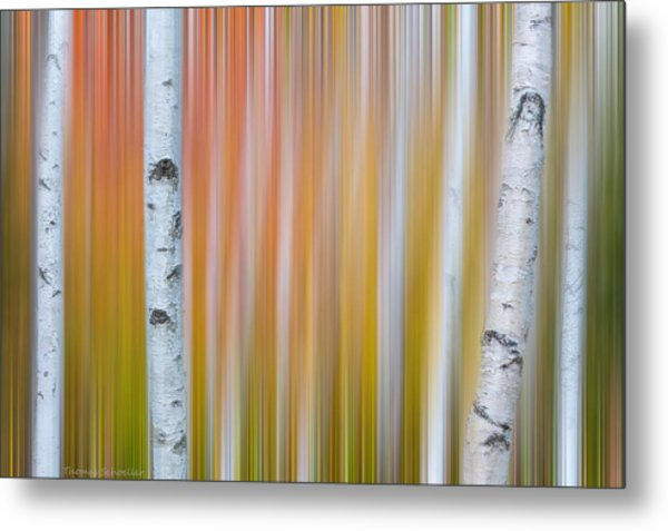 Metal Print featuring the photograph Autumn Birch Abstract by Expressive Landscapes Fine Art Photography by Thom