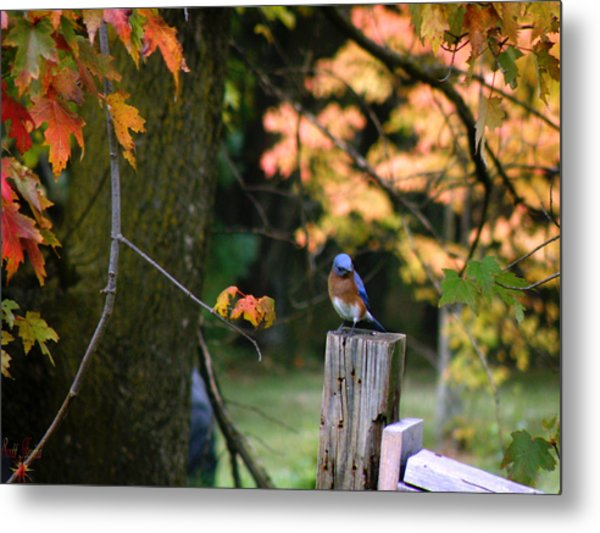 Autumn Blue Bird Metal Print