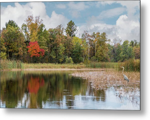 Autumn Blue Heron Metal Print