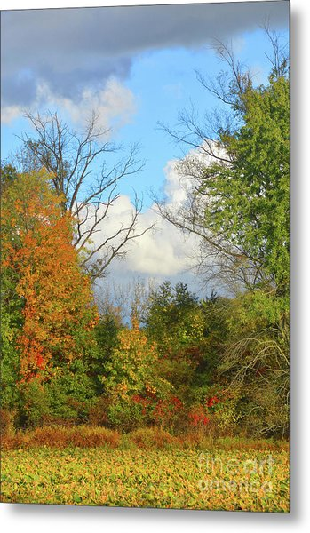 Autumn Breeze Nature Art Metal Print