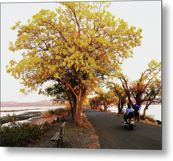 Autumn Causeway Metal Print