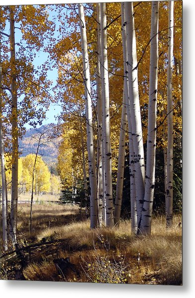 Autumn Chama New Mexico Metal Print