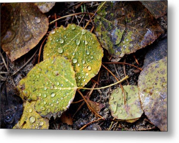 Autumn Dew Metal Print