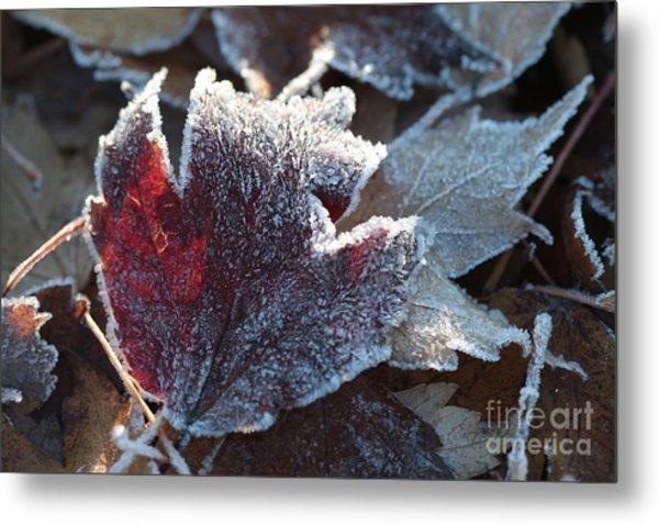 Autumn Ends, Winter Begins 2 Metal Print