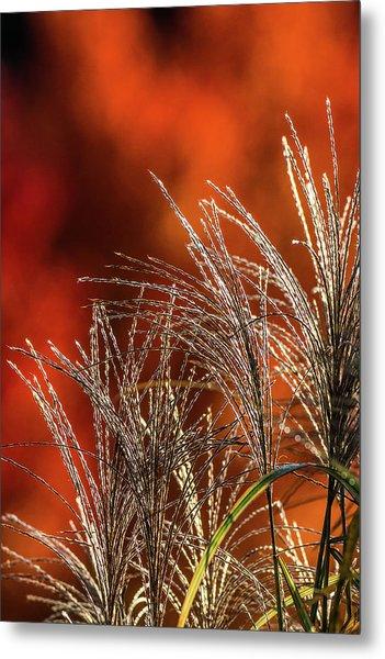 Autumn Fire - 1 Metal Print