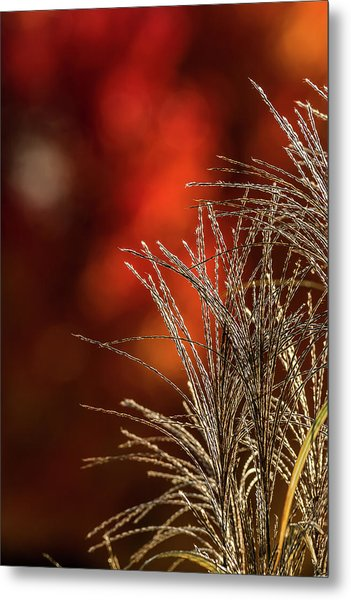 Autumn Fire - 2 Metal Print