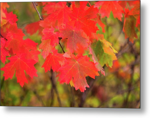 Metal Print featuring the photograph Autumn Flash by Bryan Carter