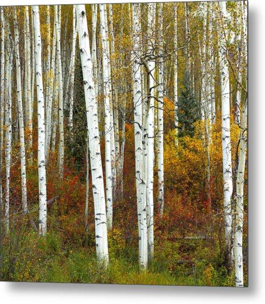 Autumn Forest Beauty Metal Print
