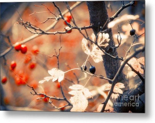 Autumn Forest Metal Print by Konstantin Sevostyanov