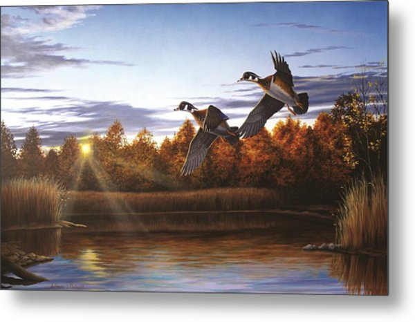 Autumn Home - Wood Ducks Metal Print