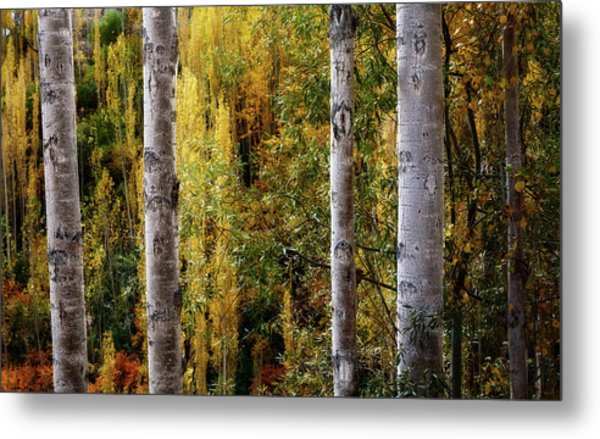 Autumn In A Jungle Metal Print