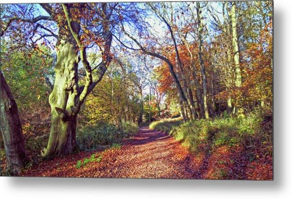 Autumn In Ashridge Metal Print