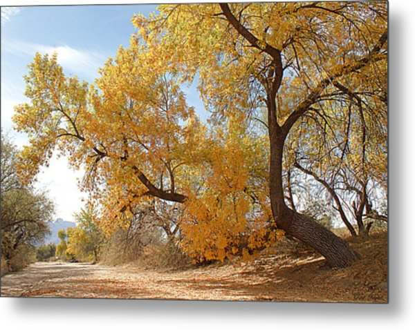 Autumn In Cdo Wash Metal Print by Greg Taylor