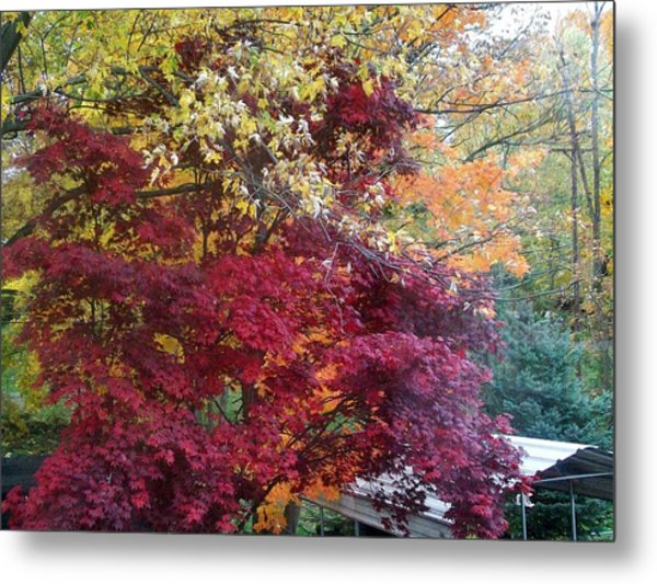 Autumn In October Metal Print by Misty VanPool
