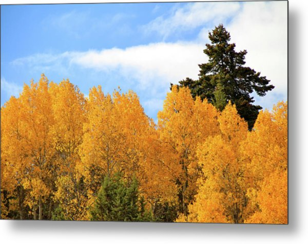 Autumn In The Owyhee Mountains Metal Print
