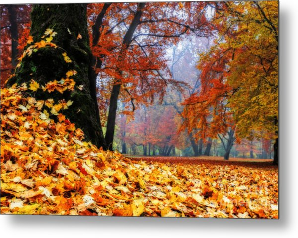Autumn In The Woodland Metal Print