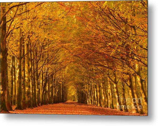 Autumn Lane In An Orange Forest Metal Print