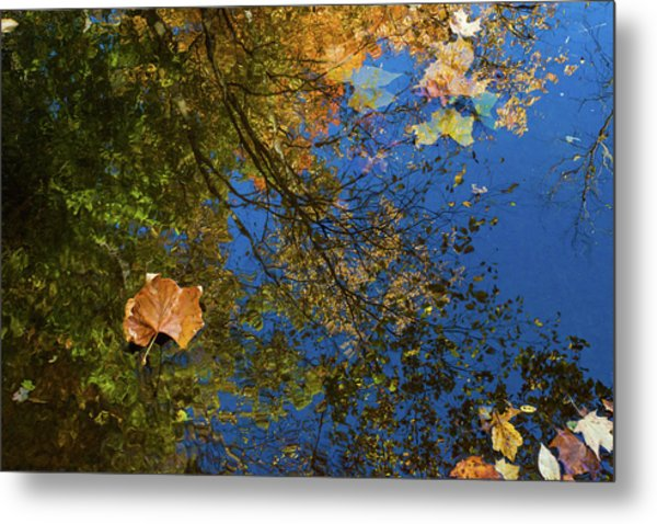 Metal Print featuring the photograph Autumn Leaf Reflections by Lon Dittrick