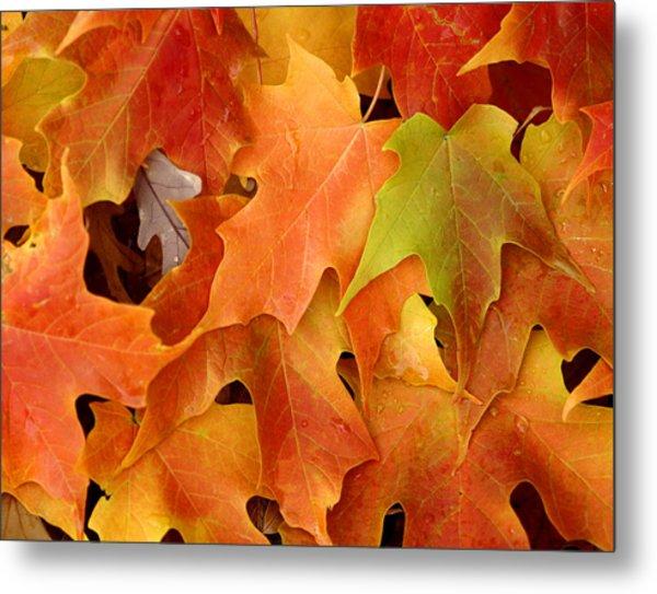 Autumn Leaves - Foliage Metal Print by Dmitriy Margolin