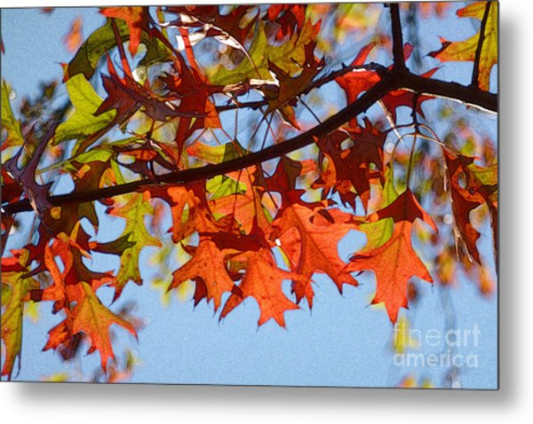 Autumn Leaves 16 Metal Print