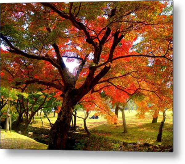Autumn Leaves 2 Metal Print