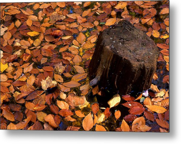 Autumn Leaves And Tree Stump Metal Print by Barry Shaffer