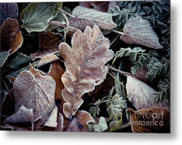 Metal Print featuring the photograph Autumn Leaves Frozen Artmif.lv by Raimond Klavins