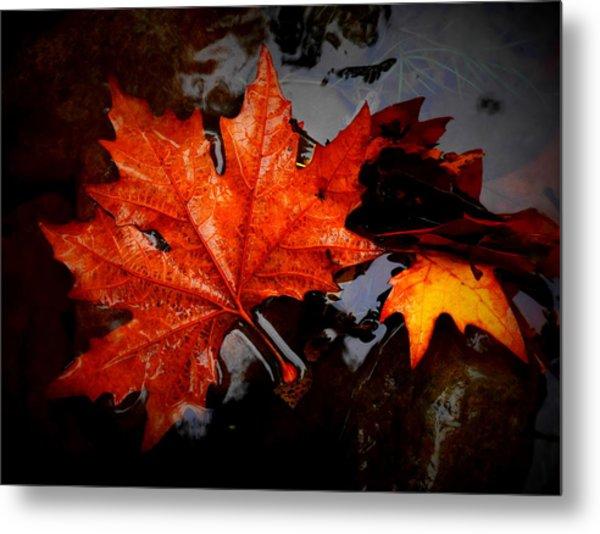 Autumn Leaves In Tumut Metal Print