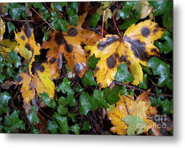 Autumn Leaves On The Ground Metal Print by Sami Sarkis