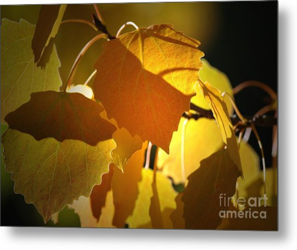 Autumn Leaves Metal Print by Sharon Talson