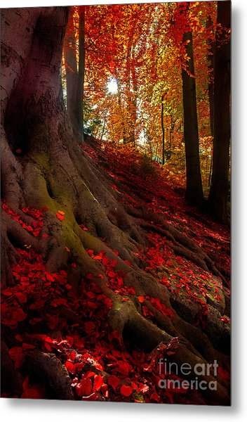 Autumn Light Metal Print
