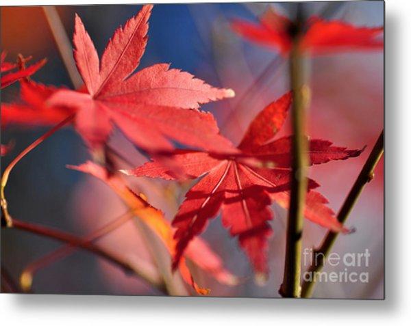 Autumn Maple Metal Print
