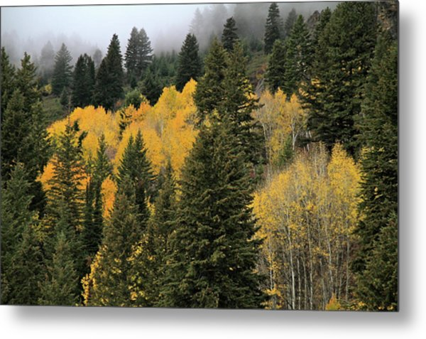 Autumn Mist, Owyhee Mountains Metal Print