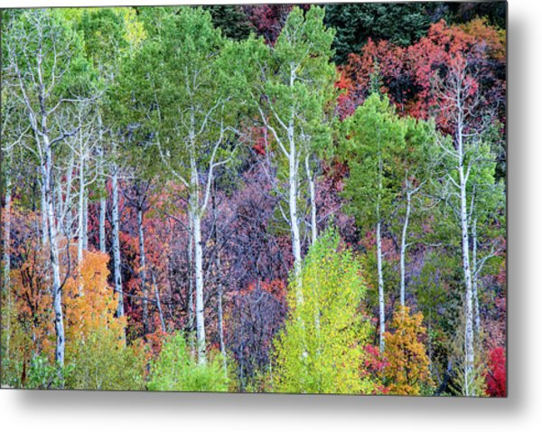 Metal Print featuring the photograph Autumn Mix by Bryan Carter