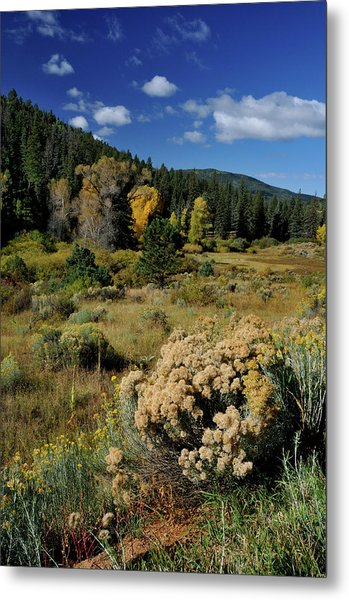 Autumn Morning In The Canyon Metal Print