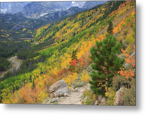 Autumn On Bierstadt Trail Metal Print